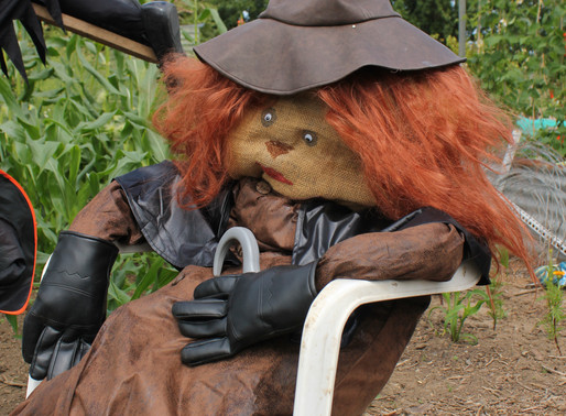 A Contest of Scarecrows