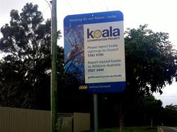 Koala Conservation Project