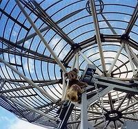koala climbing satellite dish