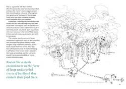 koala-land-report-nov2014-page-010