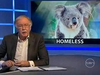 Homeless Koalas on 6:30 With George Negus