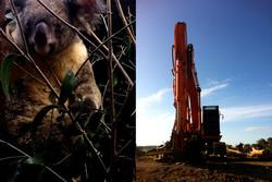 Koala and tractor.
