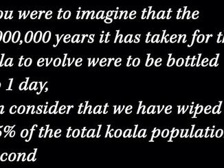 16 Million Years