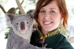 Koala Habitat Believed To Be Wiped Out In Blacktown