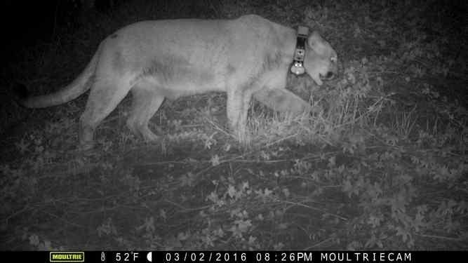 surveillance image courtesy la zoo