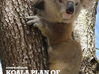 Public Exhibition Of The Draft Campbelltown Comprehensive Koala Plan Of Management