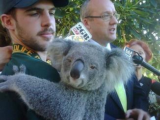 MP Luke Foley Joins Macey To Make Plea For Koalas