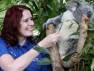 I'm Living My Childhood Dream Working With Koalas