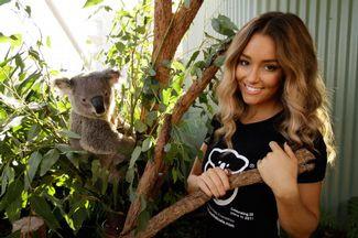 You can help save the koala