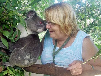Friends Of The Koala Confirm Deaths Due To Pacific Highway Upgrade