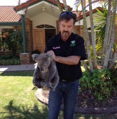 Animal Al Mucci Relocates A Koala From Monterey Keys Highlighting The Need For Wildlife Corridors