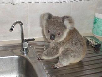 """Lockyear Valley Project Creating """"Koala Kitchen"""""""