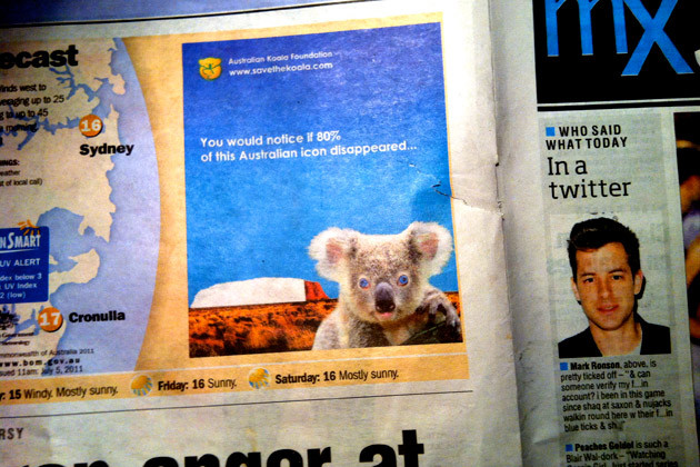 you would notice if eighty per cent of koalas disappeared
