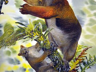 Ancient Tree-Wombat Behaved Like A Koala