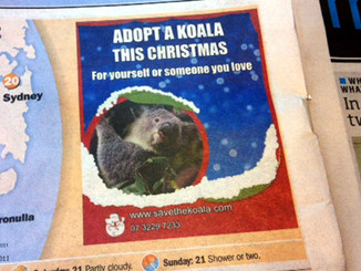 Adopt A Koala This Christmas
