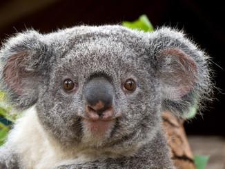Koala Headlines: Jennifer Tobey Looks Beyond The Hype