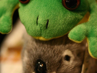 What Do Koalas And Frogs Have In Common?