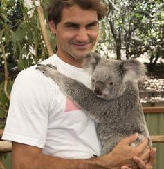 Fuzzy Words Endanger Koalas' Lives And Habitat