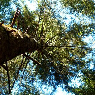 Web_Looking up tree.jpg