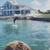 Where to See Dolphins in Marco Island and Naples Florida