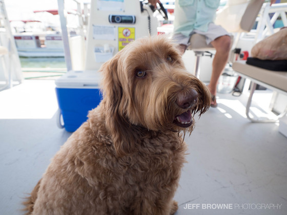 Introducing Captain Riley of Hemingway Water Shuttle