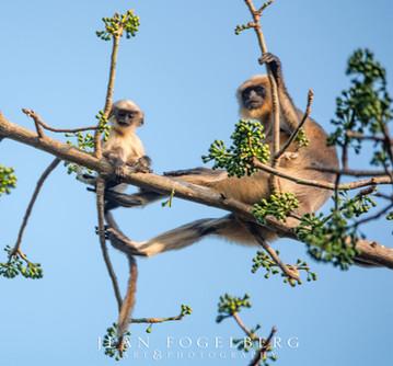 In a tree near Bhakti Kutir