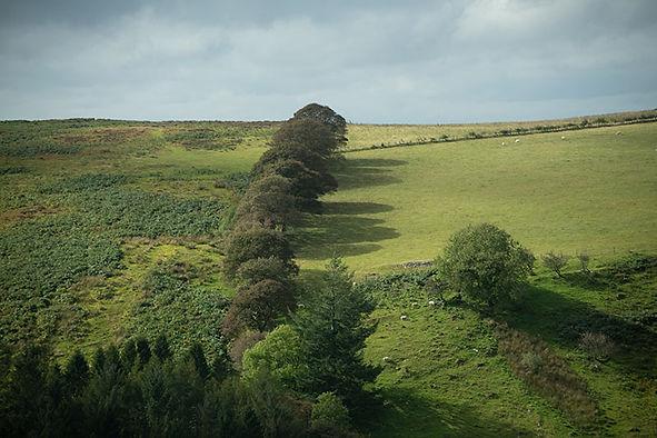 treeshadowsunret.jpg