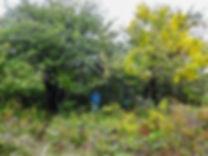 cleanuptrees2.jpg