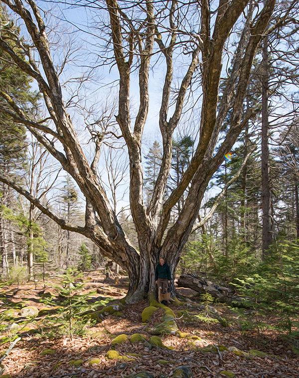 missycattree.jpg
