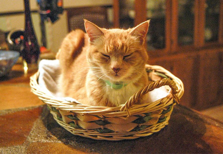 momdadcat.jpg