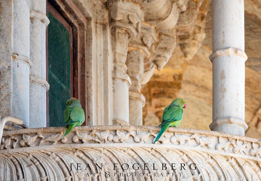 Parrots on palace balcony.