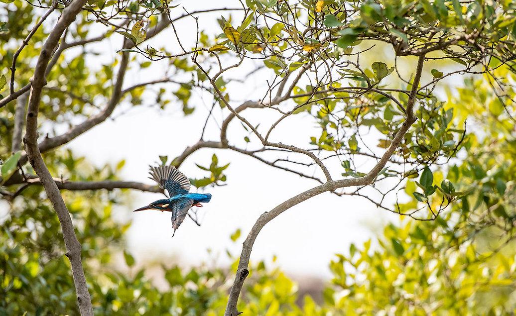 kingfishergoa.jpg