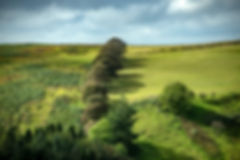 treeshadows2.jpg