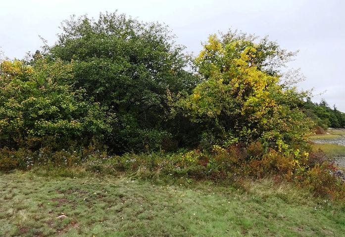 cleanuptrees.jpg