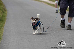 walk the wight 2015 silver aniversary 082 copy