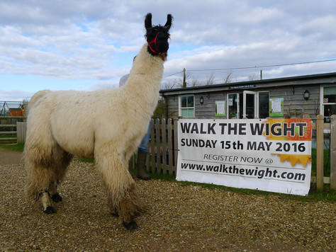 Congratulations to our Llama Walkers!