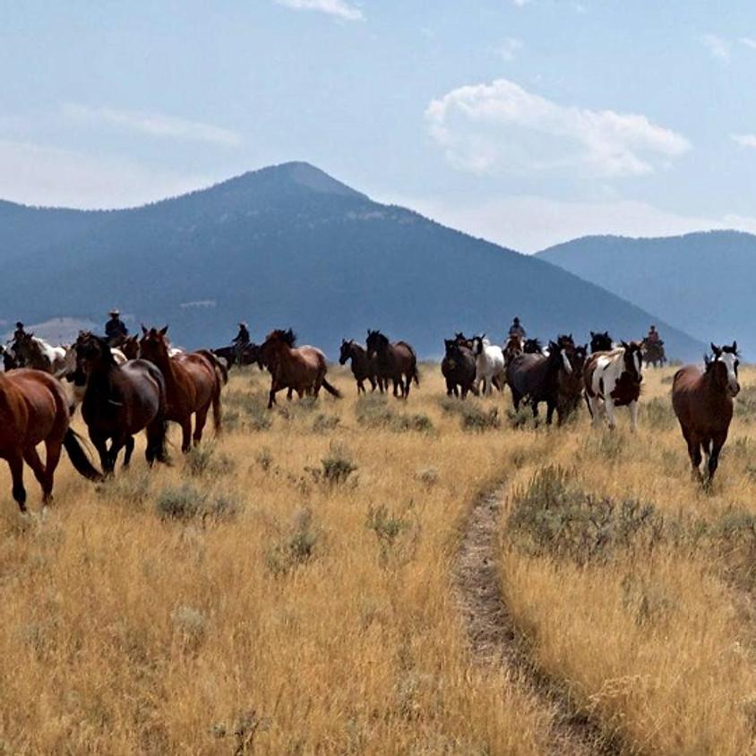 May 19-25 Horse Drive