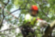 Assist Group are an arboricultural specialist