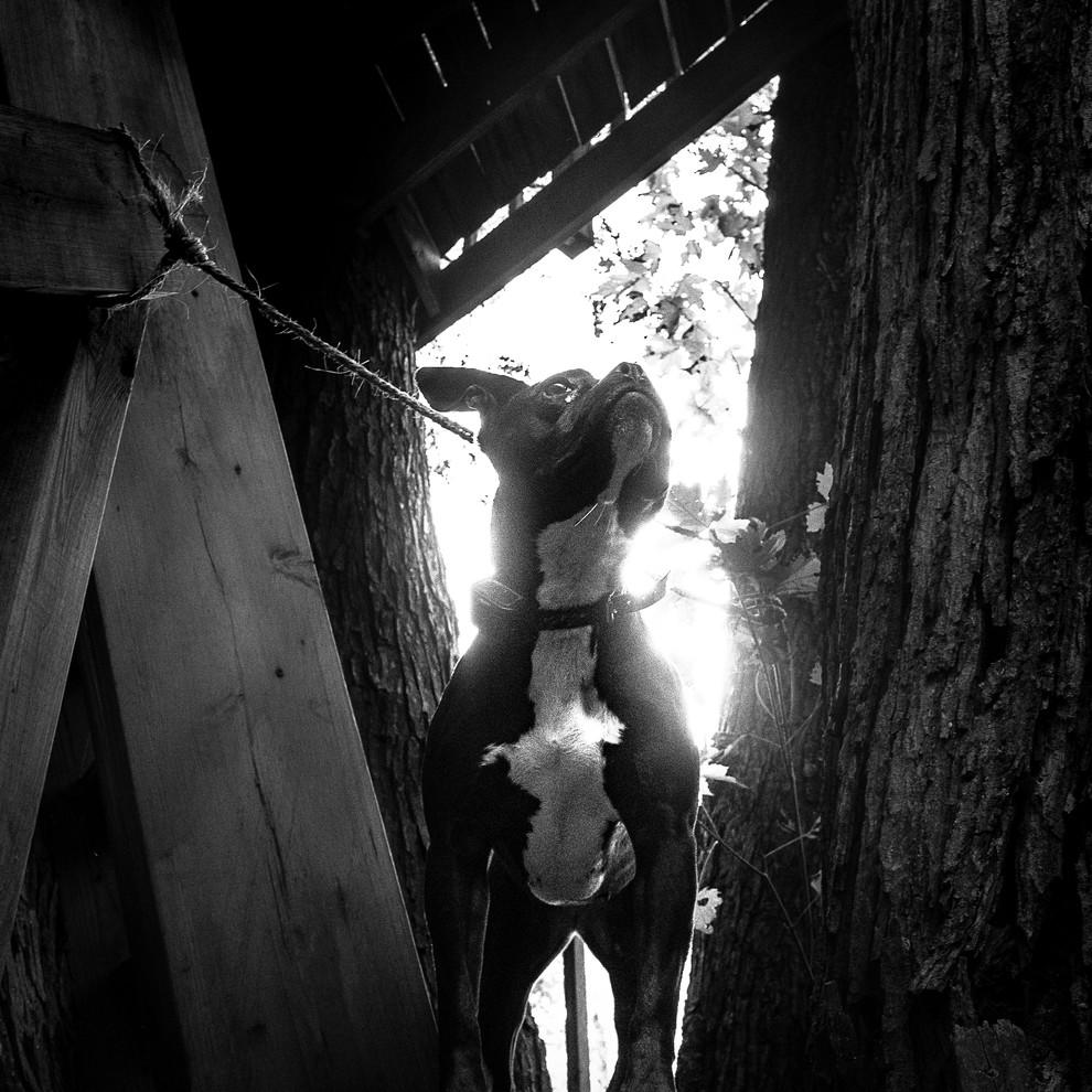 remi tree house.jpg