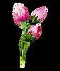 Rose knopper