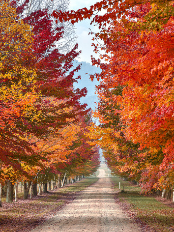 Autumn's Path