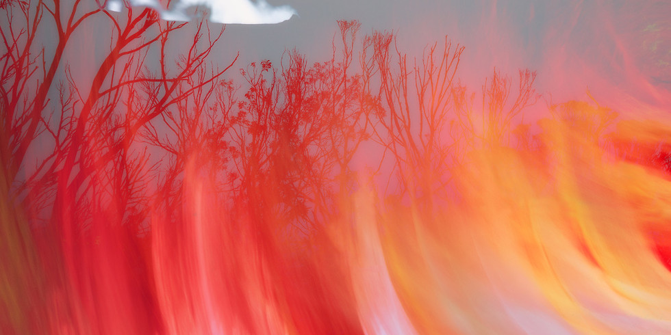 Phoenix - Meet the Artists: Sloane Griffin and Anna Luscombe