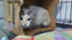 barn kitty.jpg