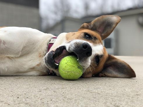 Hunni with ball.jpeg
