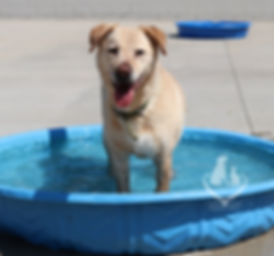 Dog in Pool.png