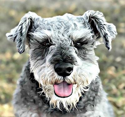 Pet Stix Louie
