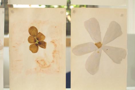 Vues de 2 pages du Journal de Traces. Les matériaux utilisés sont : pétales, thé, colle, fils colorés.