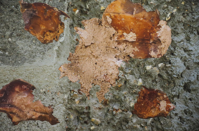 Insecte, collage à partir de photographies impressions jet d'encre, contrecollage sur aluminium  40x60cm, 2014.