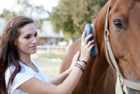 Preparing Your Horse for a Show