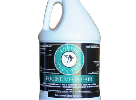 Getting Your Horse the Proper Nutrients